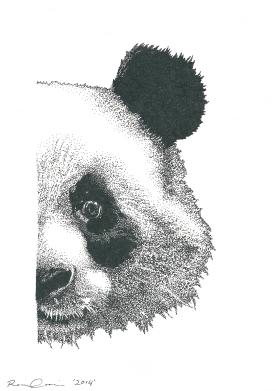 Renee Cerncic, Giant Panda