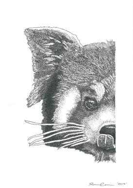 Renee Cerncic, Red Panda