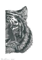 Renee Cerncic, Siberian Tiger