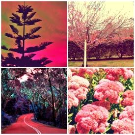 Yasemin Islek, Pink Haven